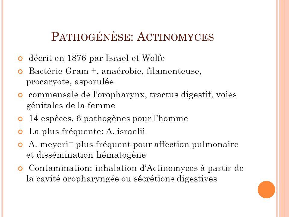 P ATHOGÉNÈSE : A CTINOMYCES décrit en 1876 par Israel et Wolfe Bactérie Gram +, anaérobie, filamenteuse, procaryote, asporulée commensale de lorophary