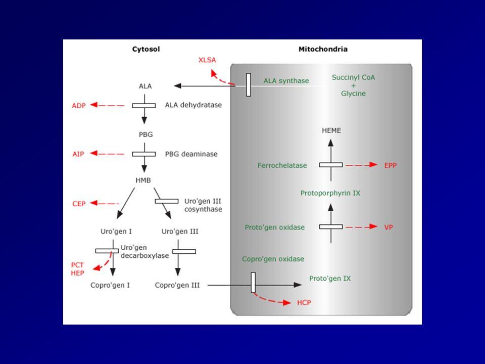 Classification Hépatiques: Déficience en ALA déhydratase ADP Déficience en ALA déhydratase ADP Porphyrie aiguë intermittente AIP Porphyrie aiguë intermittente AIP Coproporphyrie héréditaire HC Coproporphyrie héréditaire HC Porphyrie variegata VP Porphyrie variegata VP Porphyrie cutanée tardive PCT Porphyrie cutanée tardive PCTErythropoïetiques: Porphyrie érythropoïetique congénitale CEP Porphyrie érythropoïetique congénitale CEP Protoporphyrie héréditaire EPP Protoporphyrie héréditaire EPP
