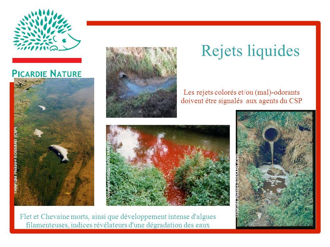 Les rejets colorés et/ou (mal)-odorants doivent être signalés aux agents du CSP Flet et Chevaine morts, ainsi que développement intense d algues filamenteuses, indices révélateurs d une dégradation des eaux Rejets liquides