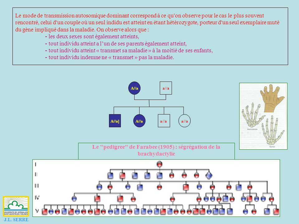 a//a A//A A//a A//AA//aA//AA//a A//Aa//a A//a A//Aa//a A//aa//a A//aa//aA//aa//a J.L. SERRE Une maladie dominante est rare, les hétérozygotes sont rar