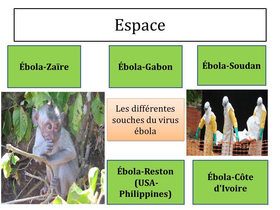 Espace Les différentes souches du virus ébola Ébola-Zaïre Ébola-Soudan Ébola-Côte d'Ivoire Ébola-Reston (USA- Philippines) Ébola-Gabon