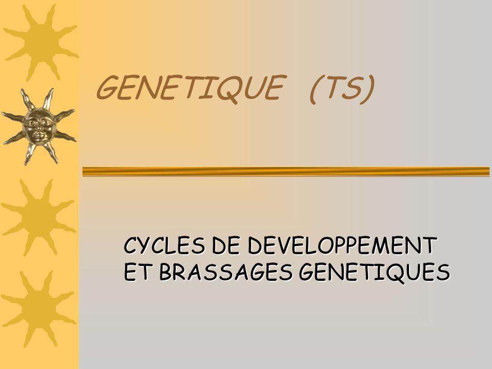 GENETIQUE (TS) CYCLES DE DEVELOPPEMENT ET BRASSAGES GENETIQUES