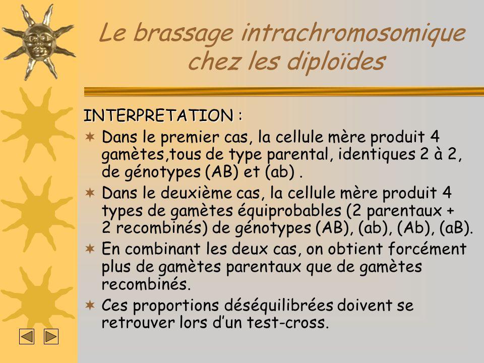 Le brassage intrachromosomique chez les diploïdes INTERPRETATION : Dans le premier cas, la cellule mère produit 4 gamètes,tous de type parental, ident