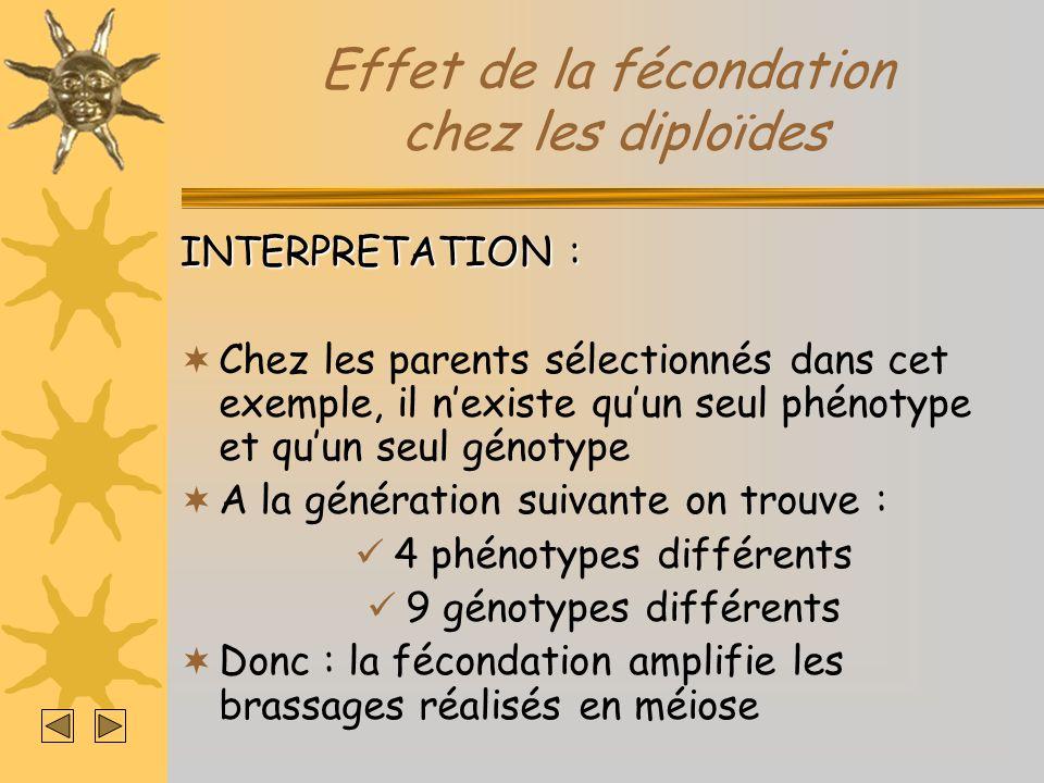 Effet de la fécondation chez les diploïdes INTERPRETATION : Chez les parents sélectionnés dans cet exemple, il nexiste quun seul phénotype et quun seu
