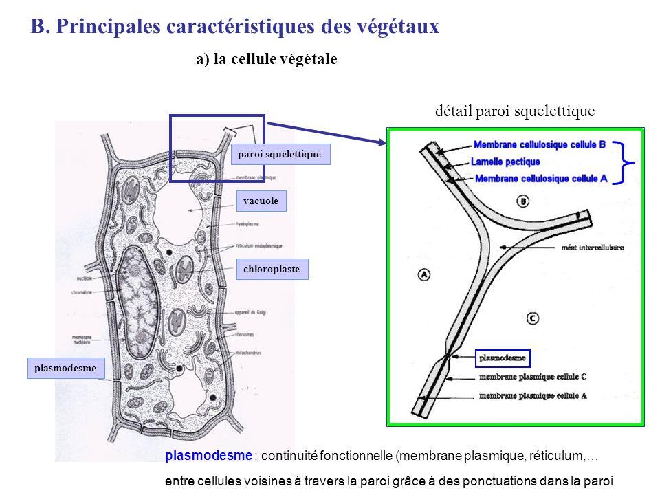 B. Principales caractéristiques des végétaux a) la cellule végétale détail paroi squelettique vacuole plasmodesme chloroplaste paroi squelettique plas