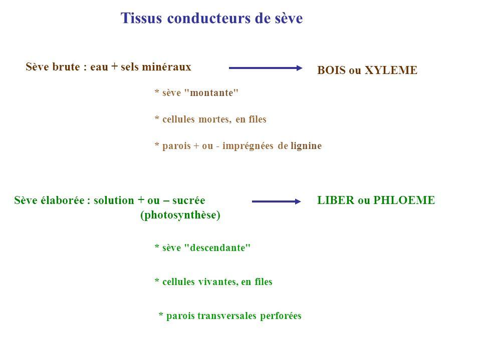 Tissus conducteurs de sève Sève brute : eau + sels minéraux BOIS ou XYLEME * cellules mortes, en files * parois + ou - imprégnées de lignine * sève