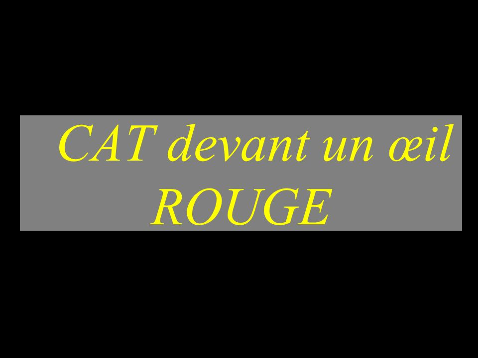 CAT ŒIL ROUGE