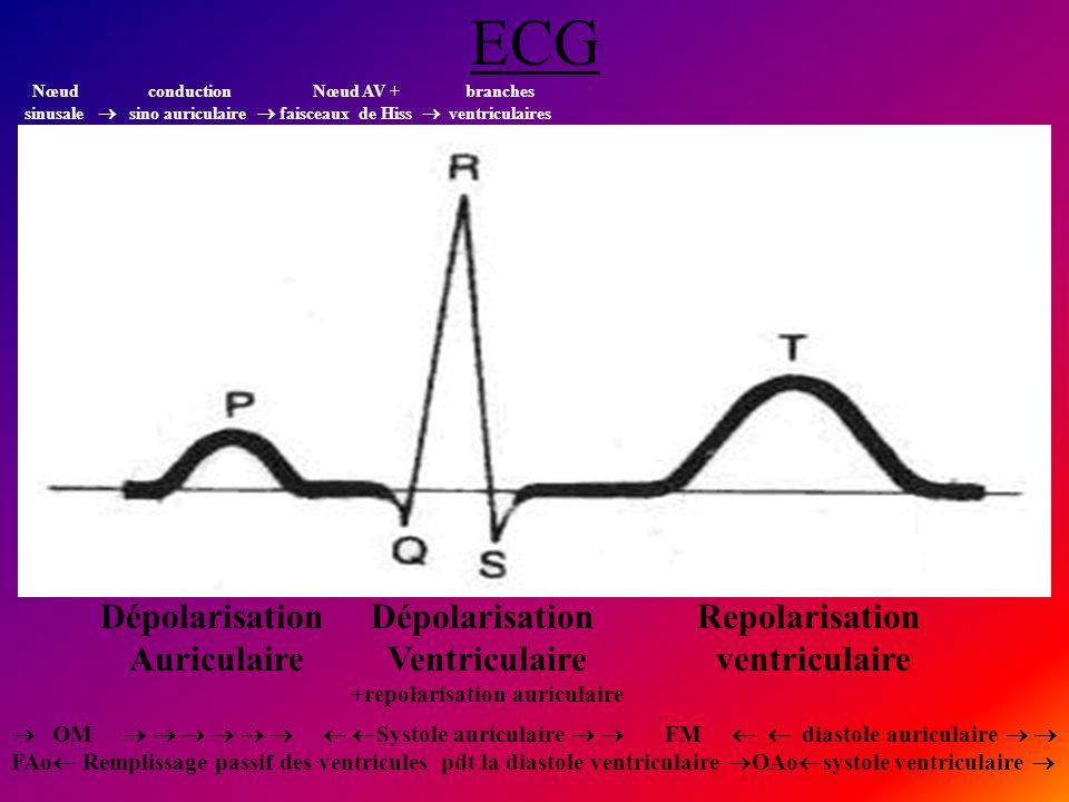 ECG Dépolarisation Auriculaire Dépolarisation Ventriculaire +repolarisation auriculaire Repolarisation ventriculaire Nœud conduction Nœud AV + branche
