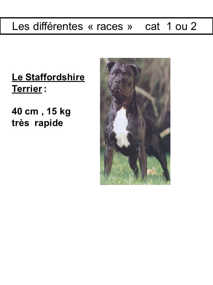 Le Staffordshire Terrier : 40 cm, 15 kg très rapide Les différentes « races » cat 1 ou 2
