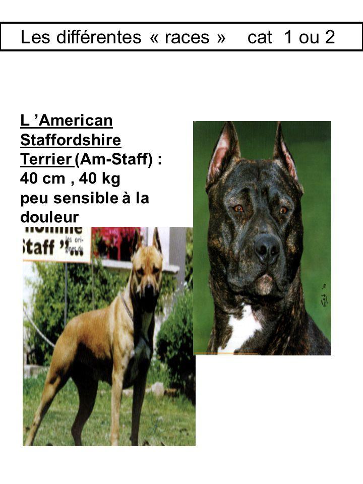 L American Staffordshire Terrier (Am-Staff) : 40 cm, 40 kg peu sensible à la douleur Les différentes « races » cat 1 ou 2