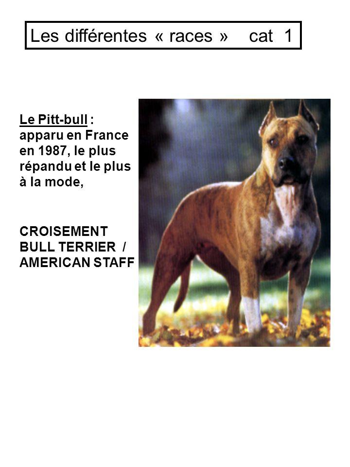 Le Pitt-bull : apparu en France en 1987, le plus répandu et le plus à la mode, CROISEMENT BULL TERRIER / AMERICAN STAFF Les différentes « races » cat