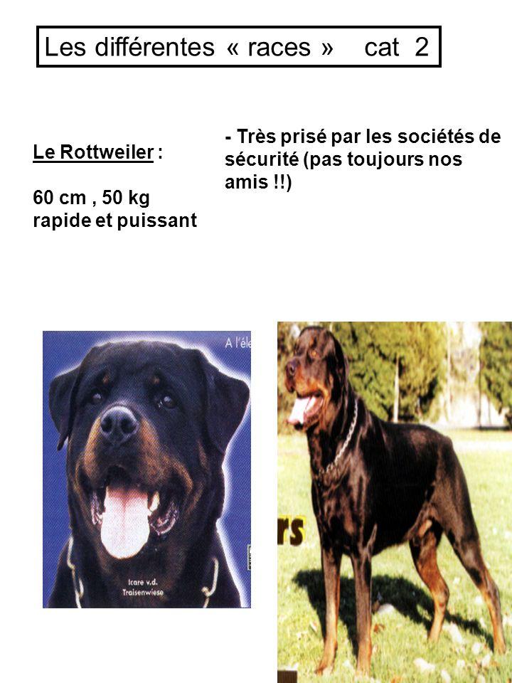 Le Rottweiler : 60 cm, 50 kg rapide et puissant - Très prisé par les sociétés de sécurité (pas toujours nos amis !!) Les différentes « races » cat 2
