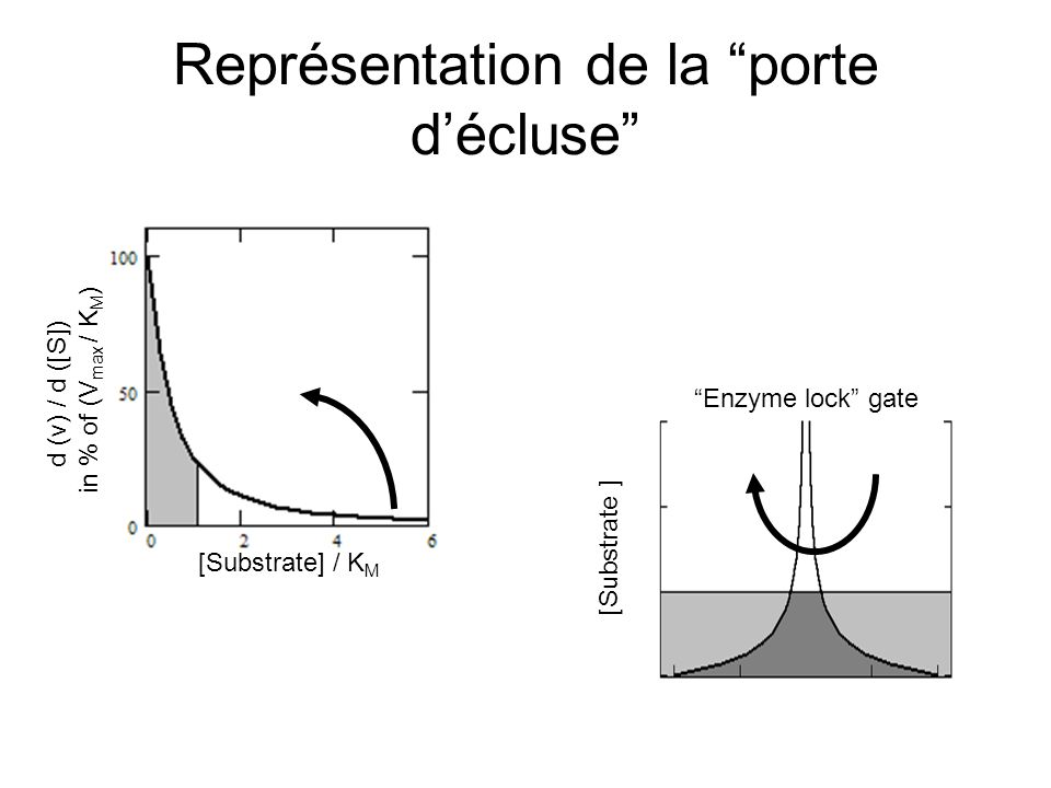 Représentation de la porte décluse [Substrate] / K M d (v) / d ([S]) in % of (V max / K M ) Enzyme lock gate [Substrate ]