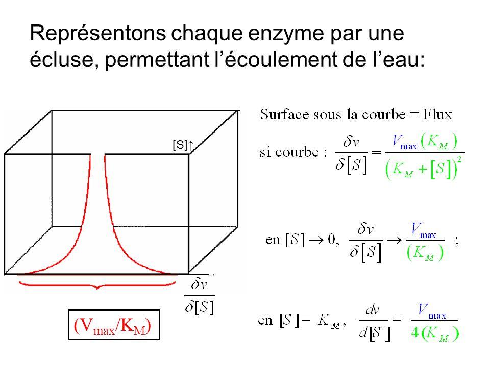 Représentons chaque enzyme par une écluse, permettant lécoulement de leau: (V max /K M ) [S]