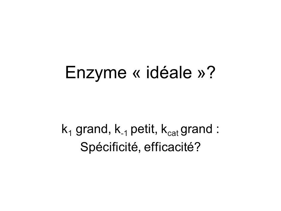 Enzyme « idéale »? k 1 grand, k -1 petit, k cat grand : Spécificité, efficacité?