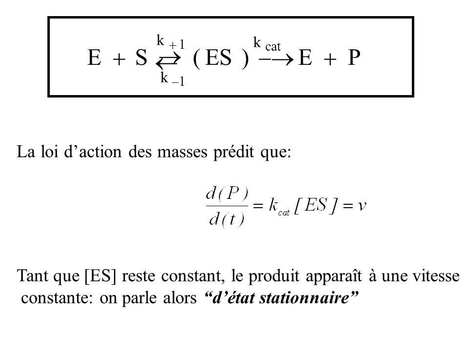 ESESEP k cat k 1 k 1 () La loi daction des masses prédit que: Tant que [ES] reste constant, le produit apparaît à une vitesse constante: on parle alors détat stationnaire