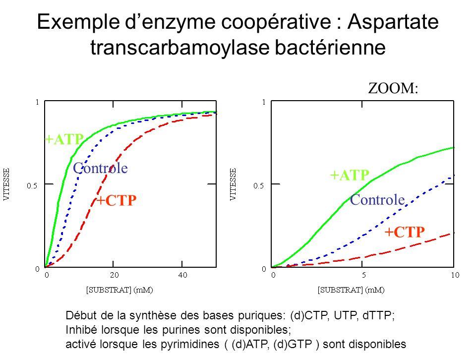 Exemple denzyme coopérative : Aspartate transcarbamoylase bactérienne ZOOM: +ATP +CTP Controle +ATP +CTP Controle Début de la synthèse des bases puriques: (d)CTP, UTP, dTTP; Inhibé lorsque les purines sont disponibles; activé lorsque les pyrimidines ( (d)ATP, (d)GTP ) sont disponibles