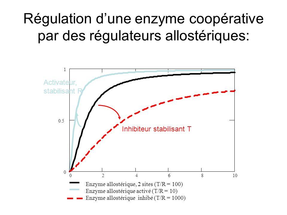 Régulation dune enzyme coopérative par des régulateurs allostériques: 0246810 0 0.5 1 Enzyme allostérique, 2 sites (T/R = 100) Enzyme allostérique activé (T/R = 10) Enzyme allostérique inhibé (T/R = 1000) Inhibiteur stabilisant T Activateur, stabilisant R