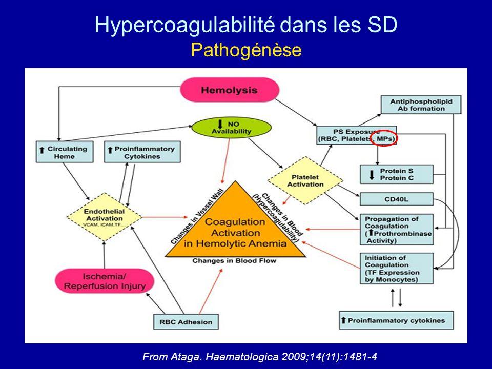 Hypercoagulabilité dans les SD Pathogénèse From Ataga. Haematologica 2009;14(11):1481-4