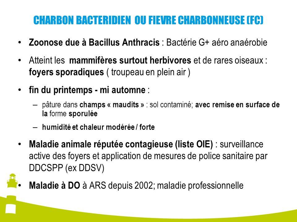 CHARBON BACTERIDIEN OU FIEVRE CHARBONNEUSE (FC) Zoonose due à Bacillus Anthracis : Bactérie G+ aéro anaérobie Atteint les mammifères surtout herbivore