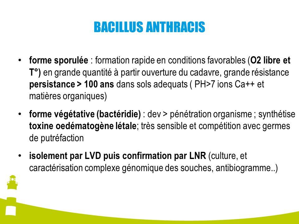 BACILLUS ANTHRACIS forme sporulée : formation rapide en conditions favorables ( O2 libre et T°) en grande quantité à partir ouverture du cadavre, gran