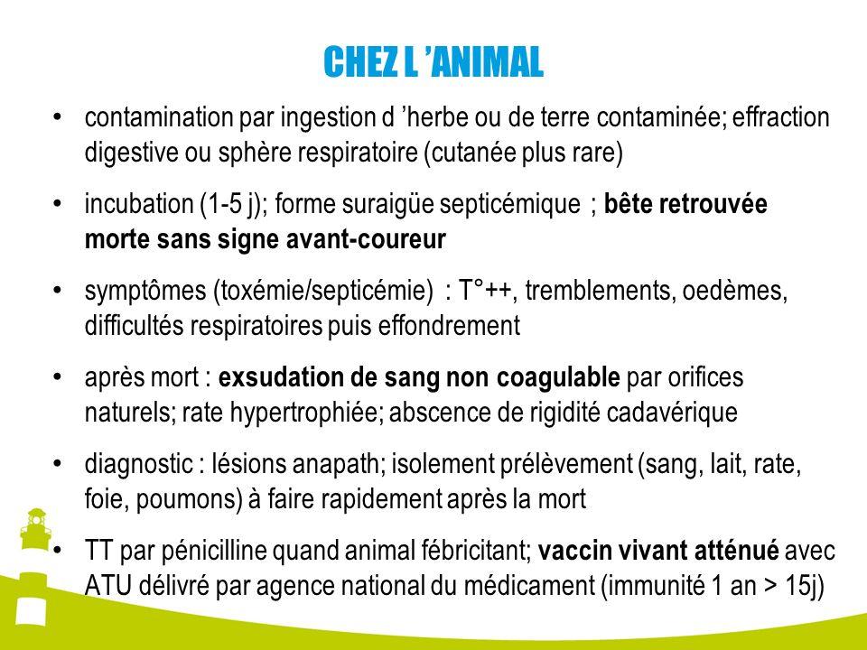 CHEZ L ANIMAL contamination par ingestion d herbe ou de terre contaminée; effraction digestive ou sphère respiratoire (cutanée plus rare) incubation (