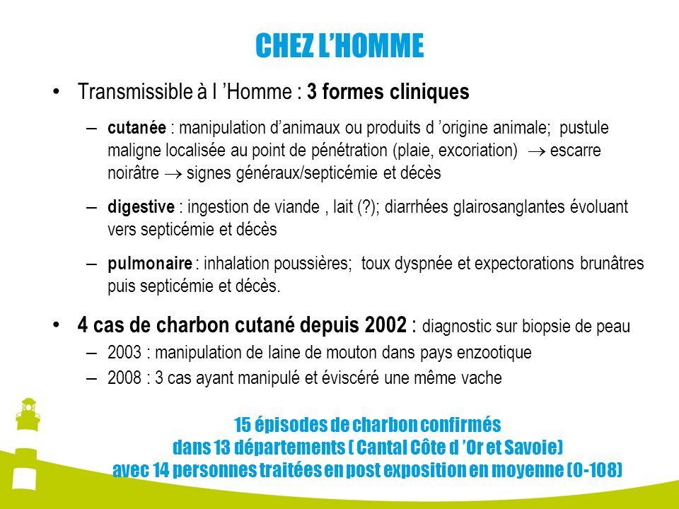 CHEZ LHOMME Transmissible à l Homme : 3 formes cliniques – cutanée : manipulation danimaux ou produits d origine animale; pustule maligne localisée au