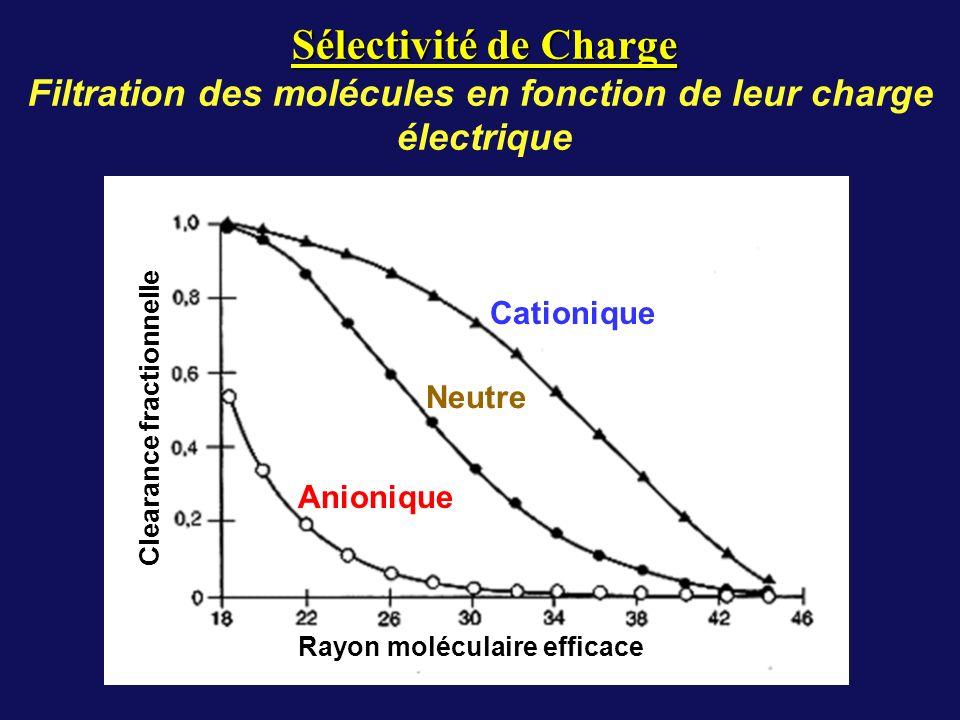 Cationique Neutre Anionique Rayon moléculaire efficace Clearance fractionnelle Sélectivité de Charge Filtration des molécules en fonction de leur charge électrique