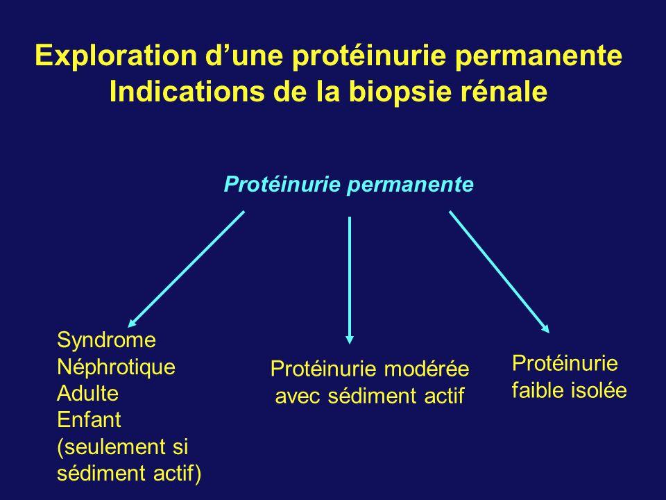 Exploration dune protéinurie permanente Indications de la biopsie rénale Protéinurie permanente Syndrome Néphrotique Adulte Enfant (seulement si sédiment actif) Protéinurie modérée avec sédiment actif Protéinurie faible isolée