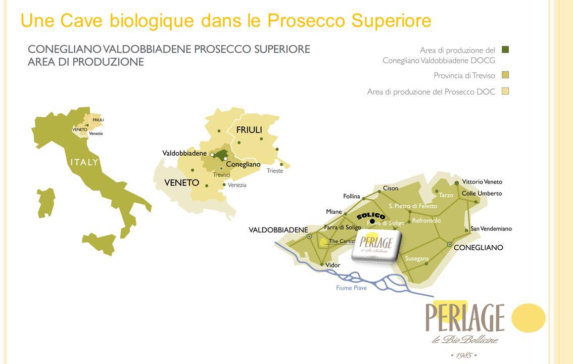 Une Cave biologique dans le Prosecco Superiore