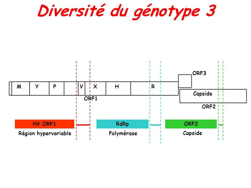 Diversité du génotype 3 Capside ORF3 ORF2 ORF1 M YPVXHR HV ORF1RdRpORF2 Région hypervariable Polymérase Capside