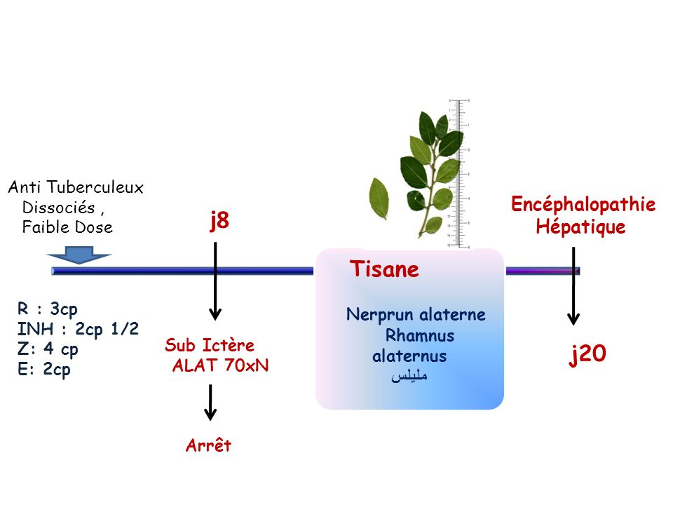 Anti Tuberculeux Dissociés, Faible Dose Sub Ictère ALAT 70xN j8 Arrêt Tisane Nerprun alaterne Rhamnus alaternus مليلس Encéphalopathie Hépatique j20 R