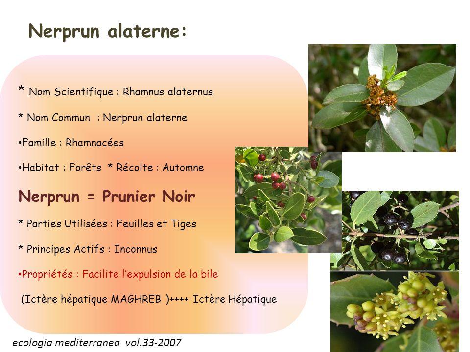Nerprun alaterne: * Nom Scientifique : Rhamnus alaternus * Nom Commun : Nerprun alaterne Famille : Rhamnacées Habitat : Forêts * Récolte : Automne Ner