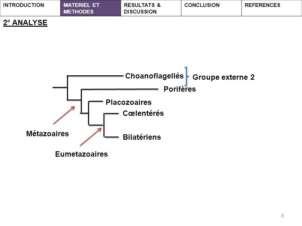 6 2° ANALYSE INTRODUCTIONMATERIEL ET METHODES RESULTATS & DISCUSSION CONCLUSIONREFERENCES Choanoflagellés Porifères Cœlentérés Placozoaires Bilatériens Métazoaires Eumetazoaires Groupe externe 2