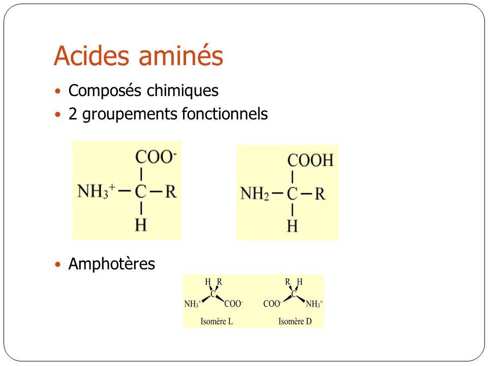 Acides aminés Composés chimiques 2 groupements fonctionnels Amphotères