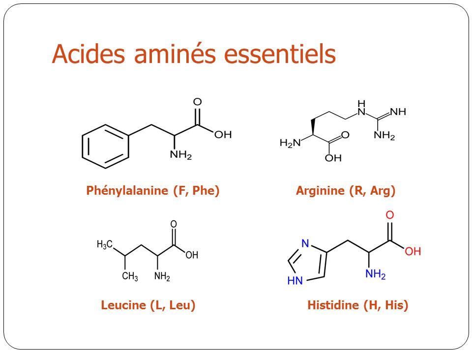 Acides aminés essentiels Phénylalanine (F, Phe)Arginine (R, Arg) Leucine (L, Leu)Histidine (H, His)