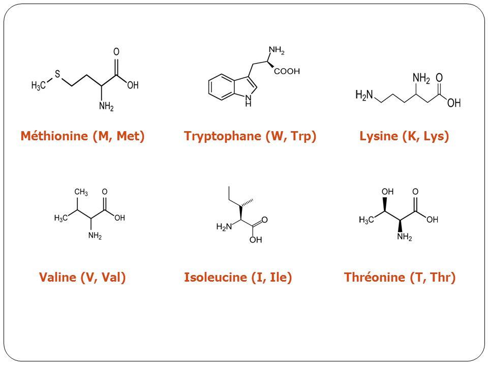 Méthionine (M, Met)Tryptophane (W, Trp)Lysine (K, Lys) Valine (V, Val)Isoleucine (I, Ile)Thréonine (T, Thr)