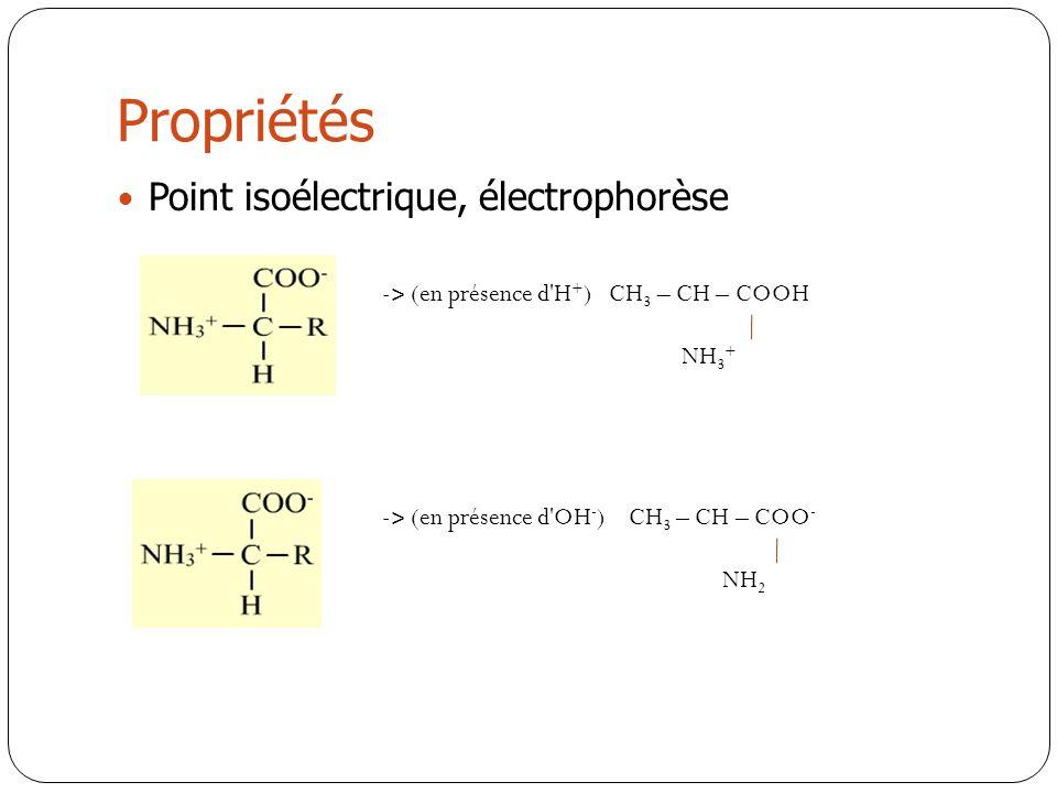 Propriétés Point isoélectrique, électrophorèse - ˃ (en présence d'H + ) CH 3 – CH – COOH NH 3 + - ˃ (en présence d'OH - ) CH 3 – CH – COO - NH 2