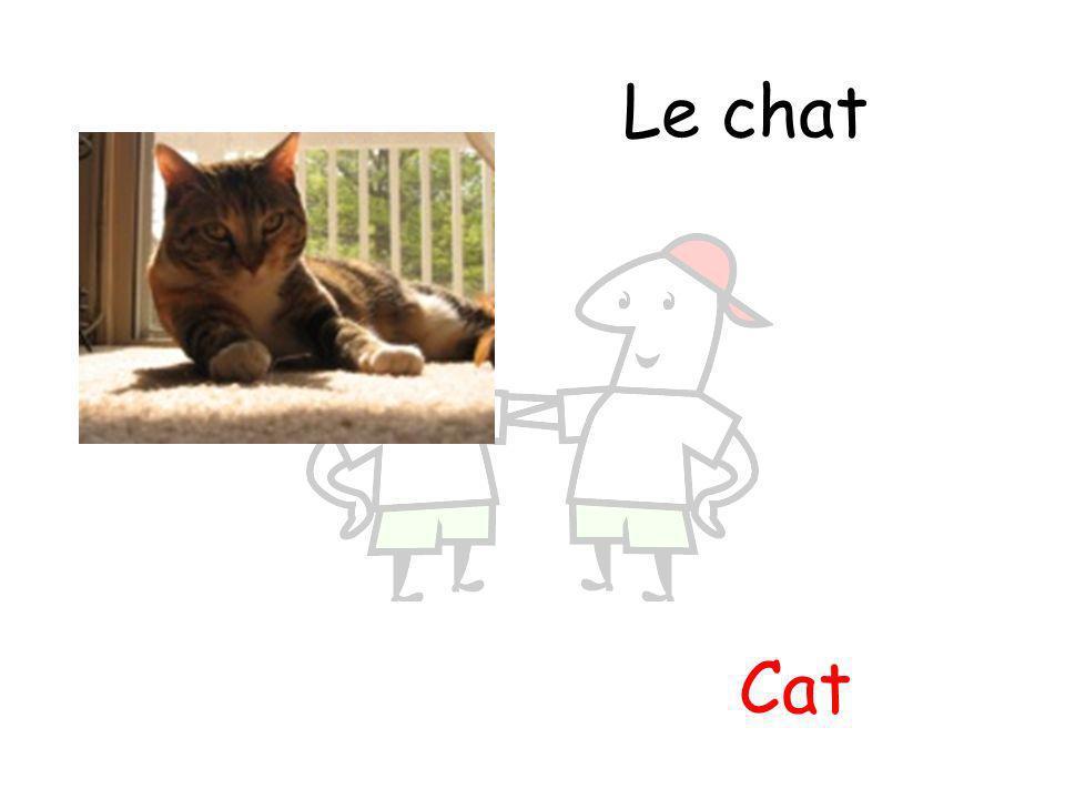 Cat Le chat
