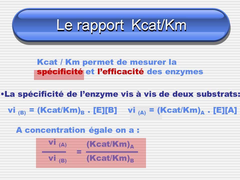 Le rapport Kcat/Km Kcat / Km permet de mesurer la spécificité et lefficacité des enzymes La spécificité de lenzyme vis à vis de deux substrats: vi (B)