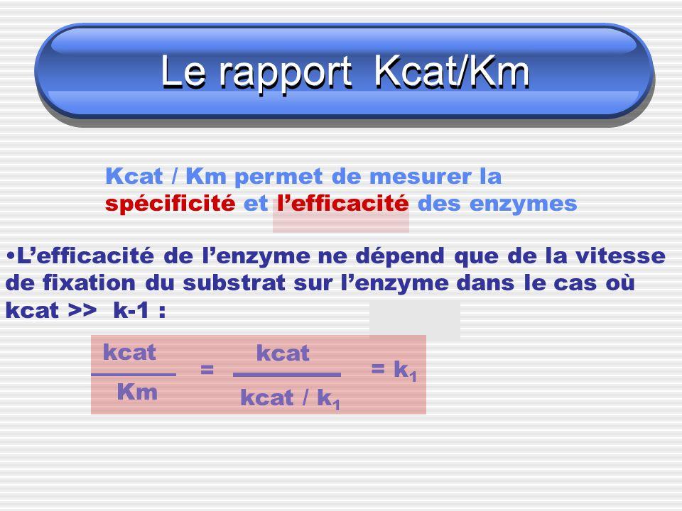 Le rapport Kcat/Km Kcat / Km permet de mesurer la spécificité et lefficacité des enzymes Lefficacité de lenzyme ne dépend que de la vitesse de fixatio