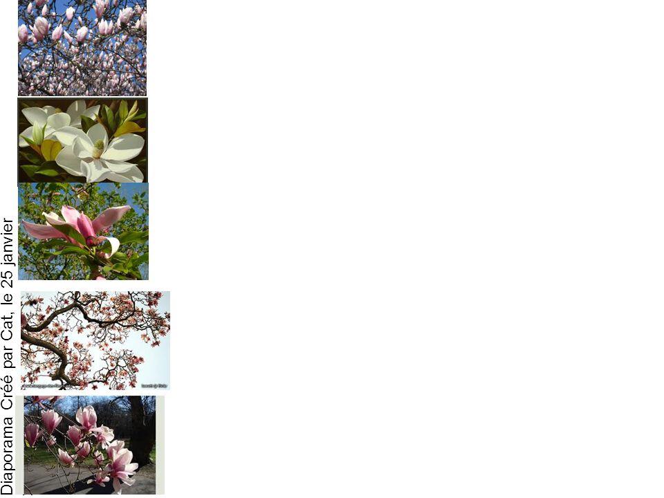 Diaporama Créé par Cat, le 25 janvier 2013 Il pleut des oiseaux aux antilles Sur des forêts de magnolias
