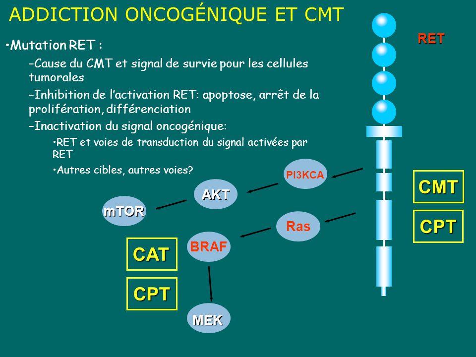 BRAF Ras CMT ADDICTION ONCOGÉNIQUE ET CMTRET CPT MEK AKT PI3KCA mTOR CAT CPT Mutation RET : –Cause du CMT et signal de survie pour les cellules tumora