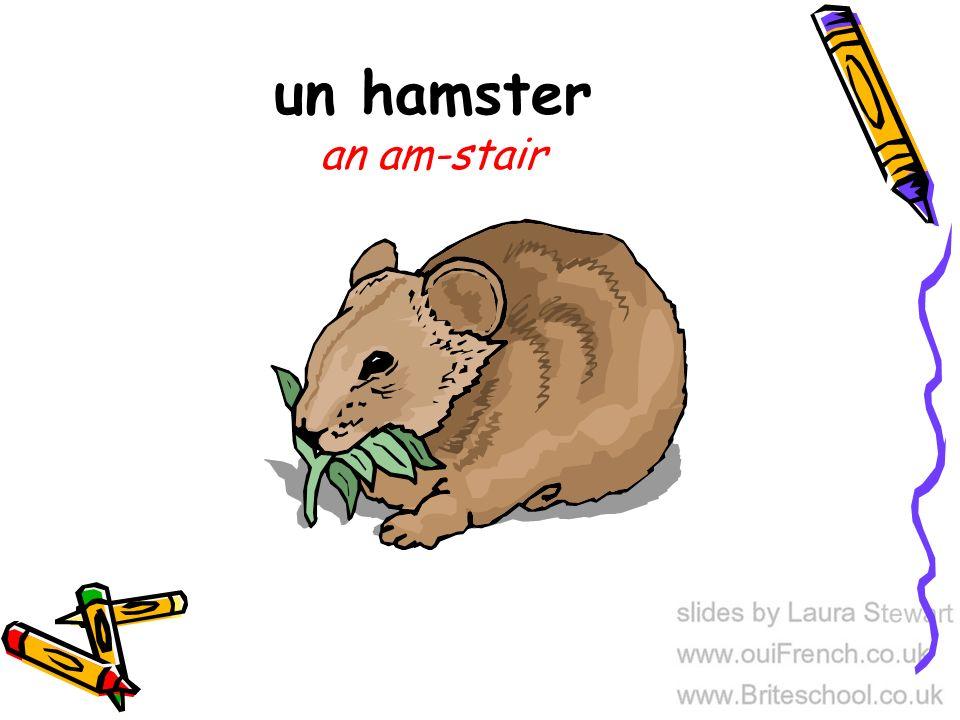 un hamster an am-stair