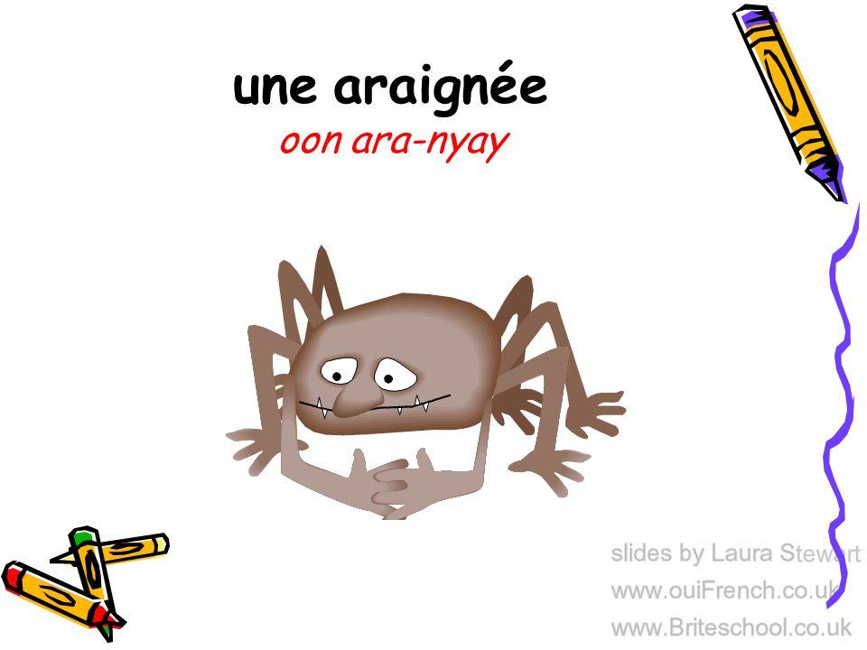 une araignée oon ara-nyay