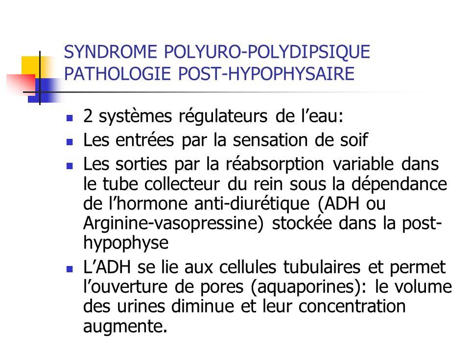 SYNDROME POLYURO-POLYDIPSIQUE PATHOLOGIE POST-HYPOPHYSAIRE 2 systèmes régulateurs de leau: Les entrées par la sensation de soif Les sorties par la réa