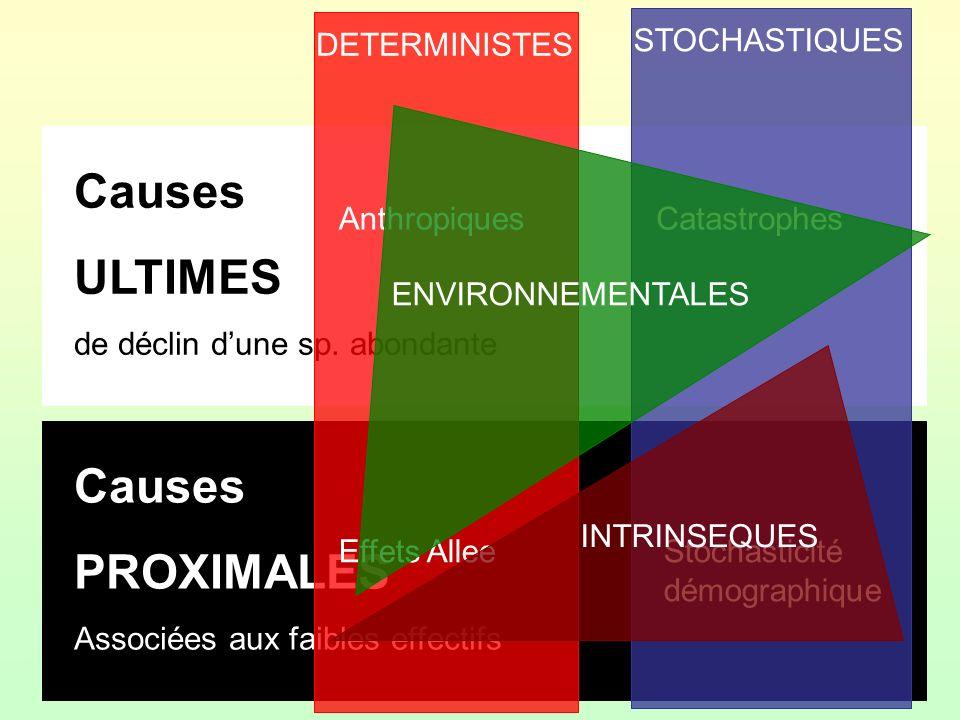 Causes ULTIMES de déclin dune sp. abondante Causes PROXIMALES Associées aux faibles effectifs DETERMINISTES STOCHASTIQUES Anthropiques Stochasticité d