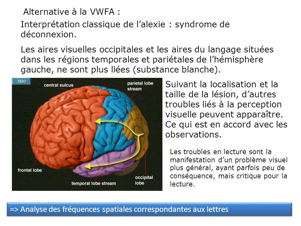 Problème de la spécificité: Cas dalexie pure de Damasio & Damasio (1983) : implication de zones occipitales en plus du gyrus fusiforme On rapporte sou