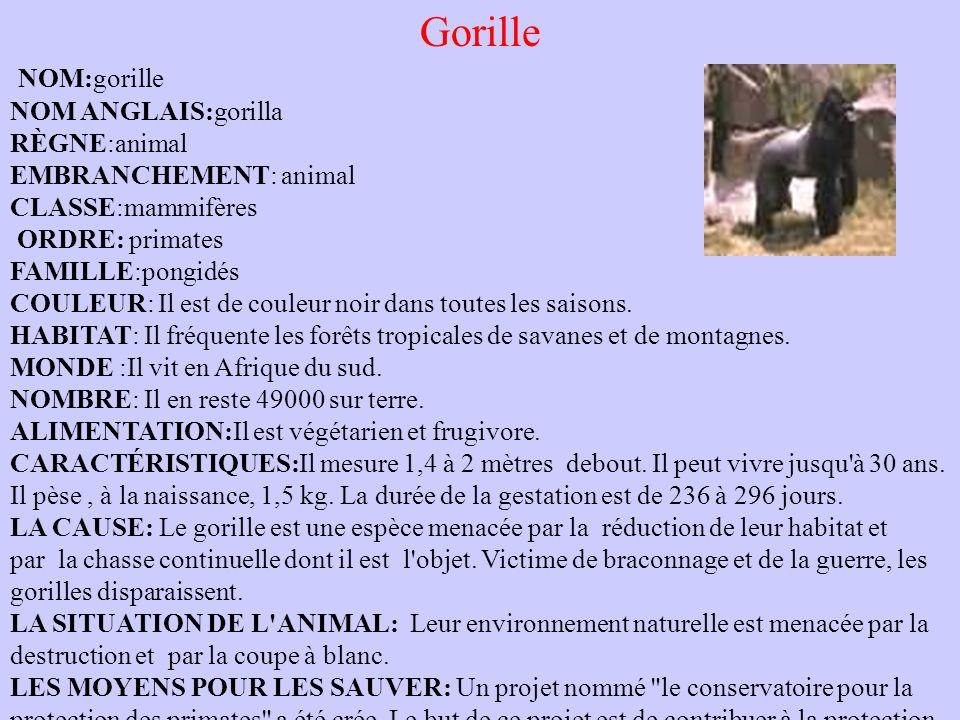 Eléphant Nom : Eléphant Embranchement : Vertébré Classe : Mammifère Habitat : Afrique ou Asie Statut : menacé La vie de l'éléphant : L'éléphant est un