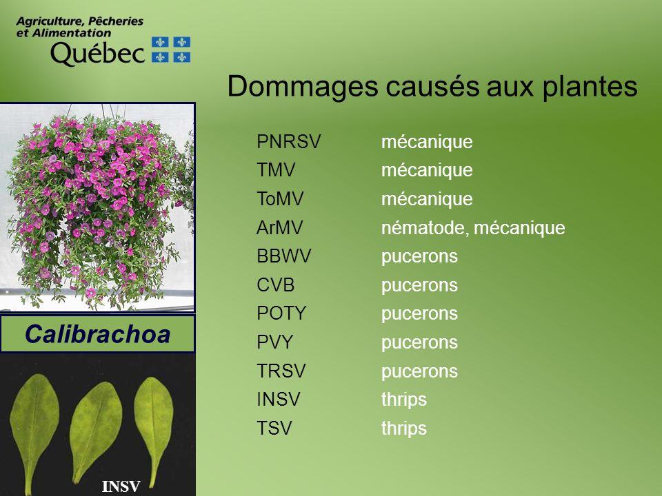 Dommages causés aux plantes Calibrachoa PNRSVmécanique TMVmécanique ToMVmécanique ArMVnématode, mécanique BBWVpucerons CVBpucerons POTYpucerons PVYpuc